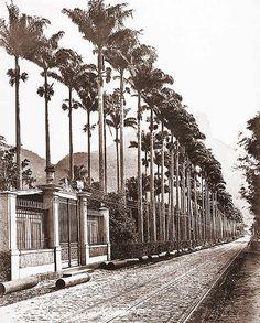 Jardim Botânico do Rio de Janeiro - Jardim Botânico, Rio de Janeiro - RJ, Brasil