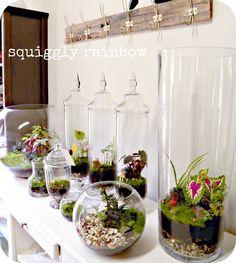 Terrariums and Miniature Gardens