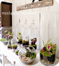 Terrariums and Miniature Gardens