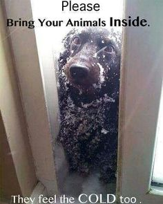 Don't leave pets in the cold