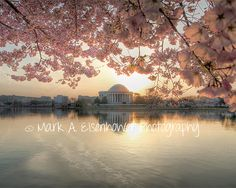Washington DC Photography, Cherry Blossoms, Orange, Pink, Teal, Flower, Sunset, 8x10 Photo, Tidal Basin Flowers on Etsy, $10.00
