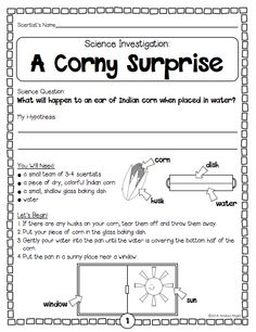 """""""A Corny Surprise"""" ... A sample investigation from the """"Thanksgiving Science"""" pack ... 5 standards-based, collaborative, hands-on science activities to help you celebrate the holiday with your students.  (24 pages, $)  #Thanksgiving  #science  #seeds  #plants"""