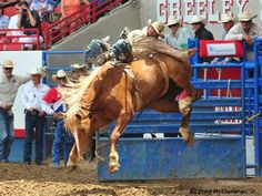 Bareback Rider Will Lowe once again celebrates the Fourth in Greeley. Story:  http://www.prorodeo.com/Story.aspx?xu=5235 #RodeoChat