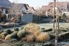 Wizytówka - Kiedyś będzie tu....Madżenie Ogrodnika - strona 2 - Forum ogrodnicze - Ogrodowisko