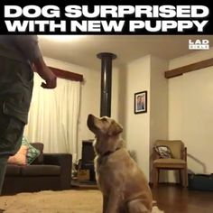 What a really beautiful reaction to the new puppy! What a really beautiful reaction to the new puppy! Funny Animal Videos, Cute Funny Animals, Cute Baby Animals, Animal Memes, Funny Dogs, Animals And Pets, Dog Videos, Stupid Funny Memes, Funny Fails