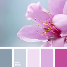 Gray-brown tones of the palette will set off and heat up initially cold shades of lilac. This palette is perfect for bedrooms as it consists of 'quiet' col Pallette, Colour Pallete, Colour Schemes, Color Combos, Color Patterns, Color Palettes, Shabby Chic Design, Shabby Chic Interiors, Shabby Chic Decor