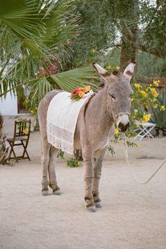 Wedding Donkey!!!