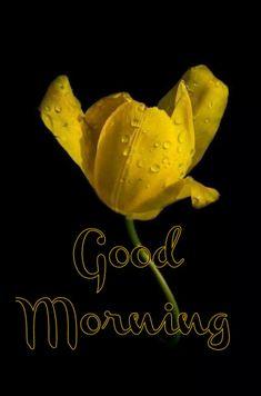 Good Morning Friends, Good Morning Images, Good Morning Quotes, Happy Wishes, Good Morning Greetings, Monday Morning, Trust God, Plant Leaves, Slaap Lekker