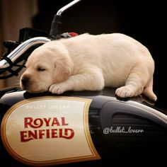 Custom Motorcycles Royal Enfield Motorcycles – About Cafe Racers Enfield Bike, Enfield Motorcycle, Motorcycle Style, Motorcycle Tips, Women Motorcycle, Motorcycle Quotes, Motorcycle Helmets, Moto Guzzi, Royal Enfield Classic 350cc