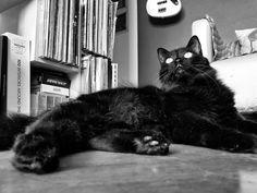 Cat. Black cat. Pet.