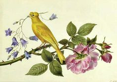 Pancrace Bessa - Canary with Pink Roses and Harebells, Late 18th - early 19th century.