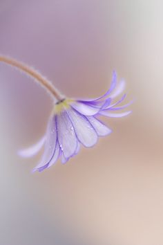 Spring pastels by ~Mandy~D, via Flickr