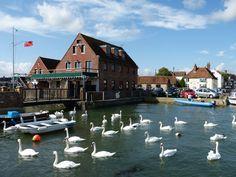 Emsworth Sailing Club...A Siege of Swans.