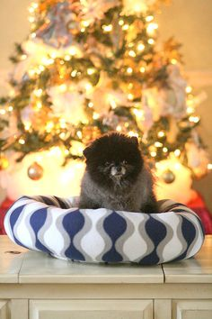 This cozy plush chevron bed. Will keep your pets warm and happy on a cold winters night. My beds are zipper free for the safety of your pets. Large 8 inch sides to snuggle in with plush polyester filling. Machine washable and air dry. Color of this bed is navy, gray and white.