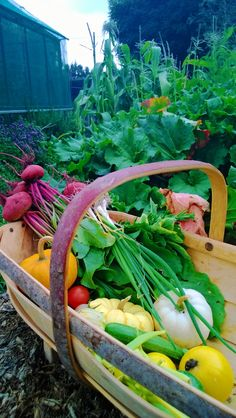 Raised Garden Beds and Vertical Vegetable Plantings: