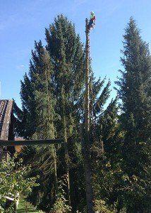 Baum fällen in München und Nürnberg