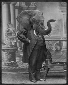 Grand Ole Bestiary, Retro Style Prints of Anthropomorphic Animal Heads on Human Bodies Elephant Head, Elephant Love, Elephant Pants, Vintage Elephant, White Elephant, Old Photos, Vintage Photos, Antique Photos, Portraits Victoriens