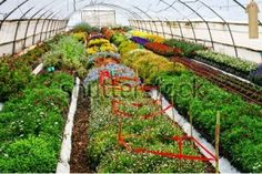 Landscaping helps to build an effective and attractive garden. The different types of gardens require landscaping. They also take care of lawn to prevent from weeds. Lawn Turf, Landscaping Supplies, Drought Tolerant, Weed, Stepping Stones, Gardens, Landscape, Outdoor Decor, Stair Risers