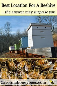 Find the best place for your new bee hive. Hive placement is key to having a healthy honey bee colony - Beekeeper Charlotte/ Carolina Honeybees