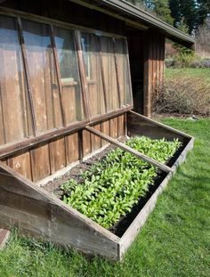 An Old-Fashioned Cold Frame - year round action photos | Lopez Island Kitchen Gardens