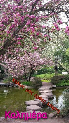 Beautiful Pink Roses, Water, Outdoor, Gripe Water, Outdoors, The Great Outdoors, Aqua