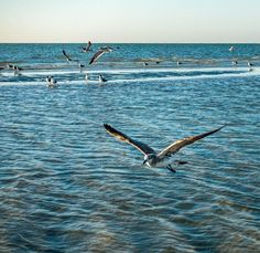 The seagulls swarmed this area of beach with a sandbar just off shore.  The seagull in the foreground caught over a dozen fish while we watched.