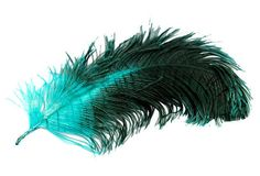 Feathers and Plumes by Cherie on Etsy