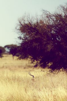 African Landscape – Photos Of Africa | Free People Blog #freepeople