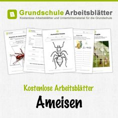 Pin by Dace Bruna on kukaiņi | Pinterest | Ant, Worksheets and ...