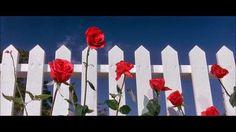 Chroniques du Cinéphile Stakhanoviste: Blue Velvet - David Lynch (1986)