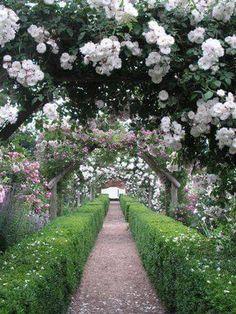 Mottisfont Abbey Garden House & Estate