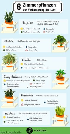 Air-cleaning plants: The Top 10 - Plantura - 6 houseplants to improve the air: With these plants, your stuffy indoor climate and harmful fumes w -