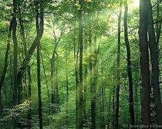 Bilderesultat for light setting in forest