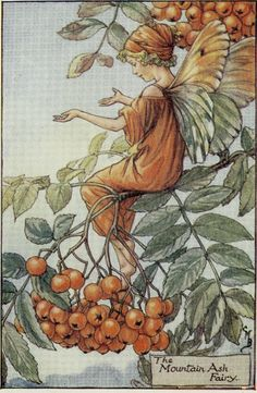 "Cicely Mary Barker ""Book of the Flower Fairies"" 1st Ed C 1927 Vintage ... great card image for mom"