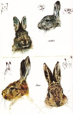 pabdesk:  Rabbit And Hare Studies by the incredible Rien Poortvliet