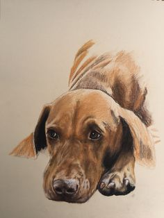 Been working on this lovely vizsla girl today...