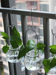 Hang Plants or Vases with S Hooks | The 9 Smartest Ways to Organize Your Entire Home with S Hooks Small Balcony Garden, Small Balcony Decor, Balcony Plants, House Plants Decor, Plant Decor, Indoor Plants, Indoor Water Garden, Diy Home Decor, Room Decor