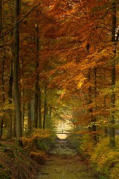 Netherlands (by dewollewei)
