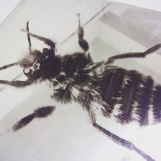 And with a #paintfill #laserengraved #mirroredacrylic #highfive #bee #sample #test #jensheehan #madeinlondon