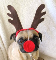 Christmas+Party+Decor++RUDOLPH+the+red+nosed+dog+or+by+ilickyou,+$15.00
