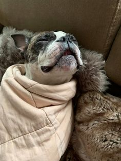"""Awesome """"boston terriers"""" detail is readily available on our internet site. Have a look and you wont be sorry you did. Boston Terrier Love, Boston Terriers, Cute Dogs And Puppies, Baby Dogs, Super Cute Animals, Best Dog Breeds, Dog Rules, Chibi, Sleeping Dogs"""