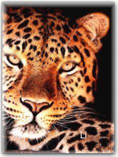 Леопард - анимация на телефон №1407227