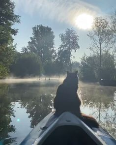 He really enjoys the early morning boat rides - Tiere - chatte Cute Funny Animals, Cute Baby Animals, Animals And Pets, Funny Cats, Wild Animals, I Love Cats, Crazy Cats, Cool Cats, Cats And Kittens