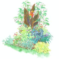 Tropical-Look Garden Plan Make a bold garden statement with dramatic flowers and foliage.