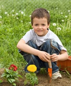 Little Green Thumbs: crops for kids. A list of plants that grow fairly quickly and have large seeds that are easy to handle. Plus the vegetables taste great. get-smart-for-kids