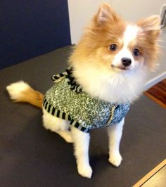 This dog sweater jacket is super cute! Every stylish dog must have this item. It is very soft, made of sweater material but lined in a faux wool and paired with a striped hood. Available in 2 colors P