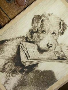 vintage illustration of a Wire Haired Fox terrier
