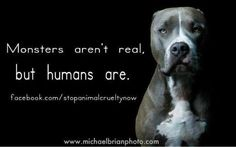 Humans kill and abuse by the millions. stop animal cruelty now Stop Animal Cruelty, Pit Bull Love, Animal Welfare, Pit Bulls, Dogs And Puppies, Doggies, Animal Rescue, Animal Testing, In This World