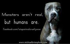 Stop Animal Cruelty Now.