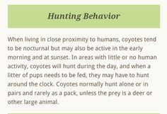 Coyote Facts, Coyote S, Large Animals, Early Morning, Habitats, Behavior, Pup, Hunting, How To Plan